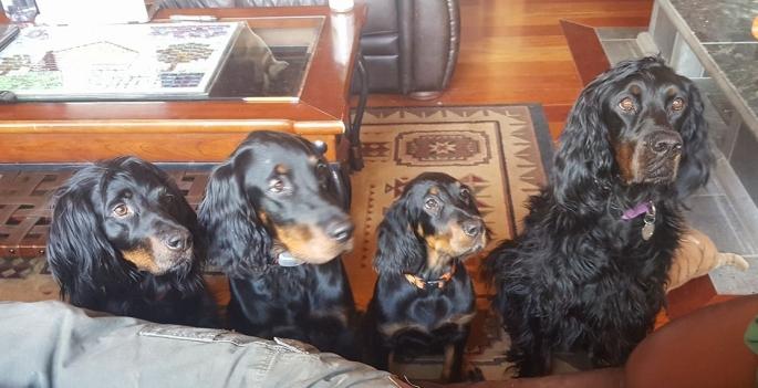 4-dogs.jpg
